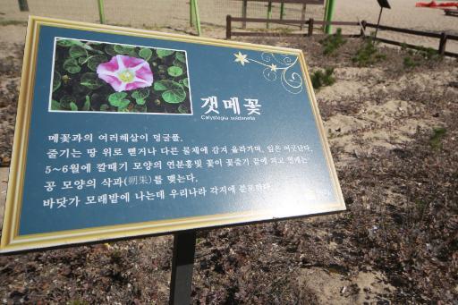 송정해변 6