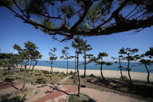 안목해변 10