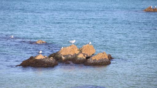 정동진해변 10