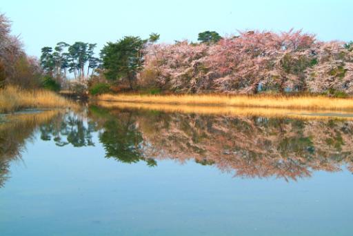 경포벚꽃잔치