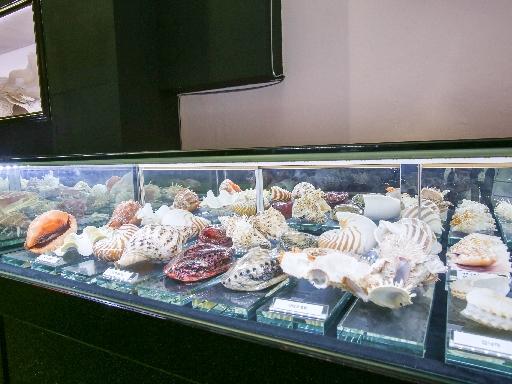 주문진해양박물관 6
