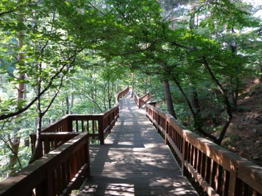 강릉솔향수목원 2