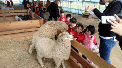 강릉아기동물농장 2