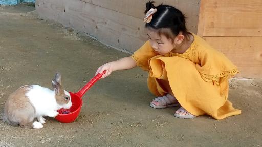 강릉아기동물농장 5
