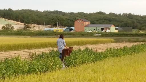 강릉아기동물농장 7